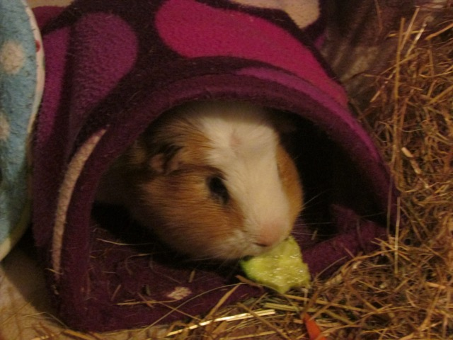Kevin with his evening cucumber