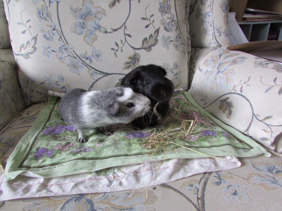Bertie and Percy