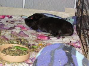 Percy sleeps