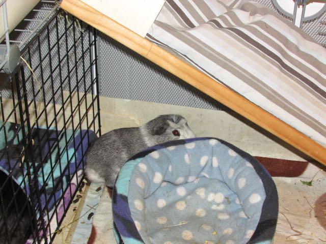 Bertie hides