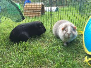 Percy and Midge