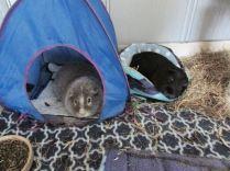 Midge and Percy snoozing