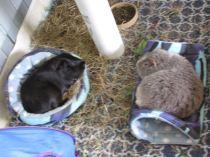 percy midge sleeping