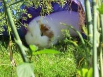 Roscoe in the shade