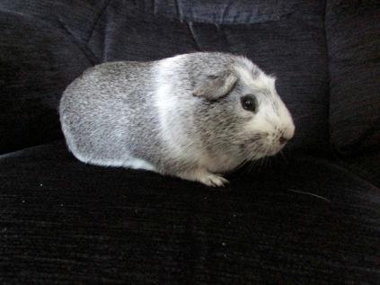 Bertie on the sofa