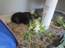 Percy with Midge