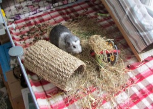 Bertie and his hay