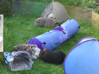 Roscoe, Midge, Neville & Percy