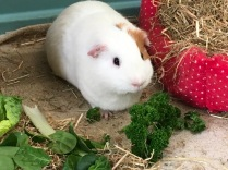 Roscoe with parsley
