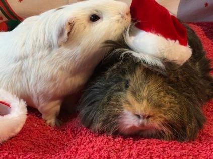 Roscoe fancies Neville's hat