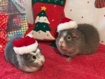 Bertie and Midge