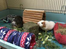 Roscoe loves the grassy box