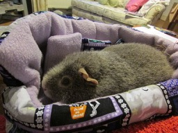 Midge likes the new bed