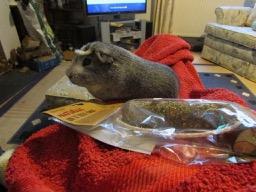 Bertie's got a food toy