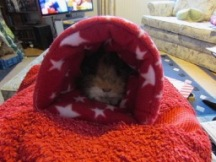 Neville loves his tunnel