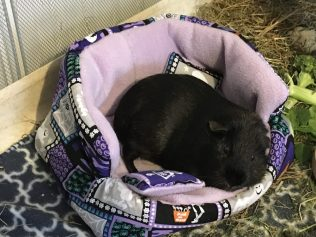 Percy's new bed