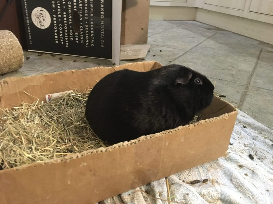Percy pig in the hay box