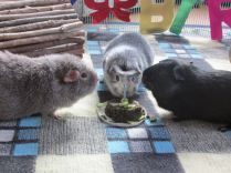Midge, Bertie & Percy; 1st birthday.