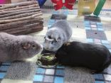 Midge and Percy help Bertie with his cake
