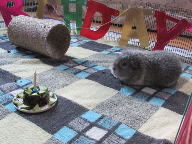 Biggles first birthday cake