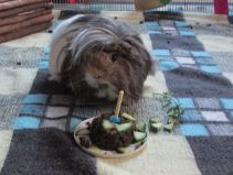 Neville at our first birthday