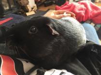 Percy likes Auntie Vikki