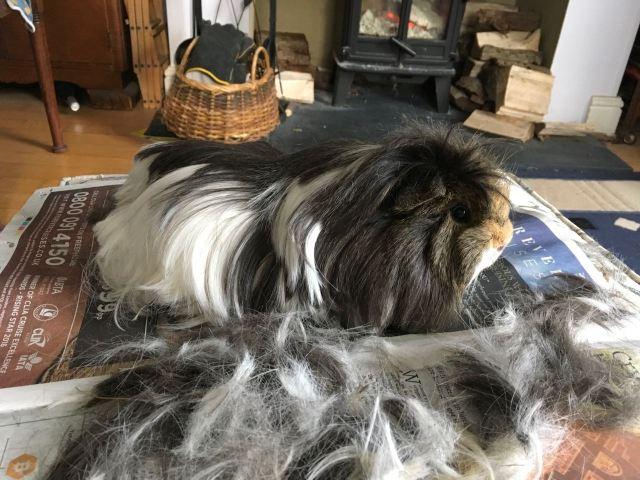 neville's haircut Mar 18