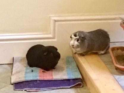 Bertie watches over Percy