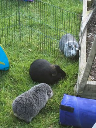 Percy looks after Biggles and Bertie