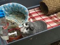 Bertie in his new cage