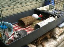 Bertie in the grey cage