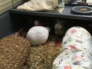 Bertie hiding