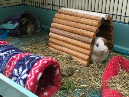 Roscoe keeping an eye on Bertie