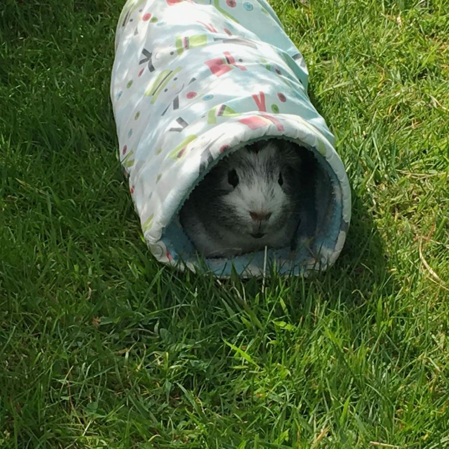 Bertie in tthe tunnel