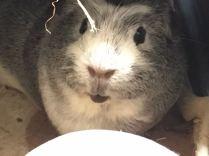 Bertie looking cute