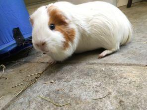 Roscoe on the floor