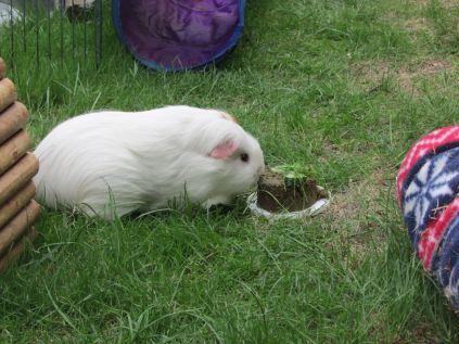 Roscoe and his Gotcha cake