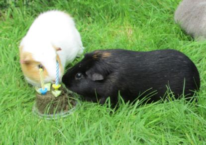 Kevin and Percy share Birthday cake