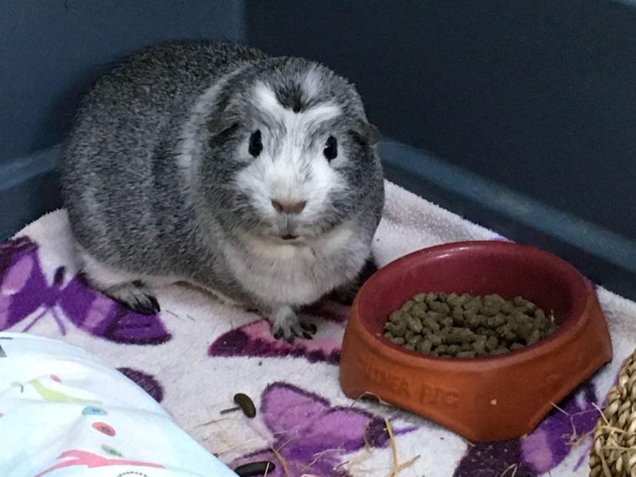 Bertie with his pellet bowl