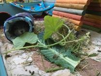 Biggles and cucumber