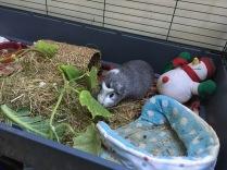 Bertie and cucumber