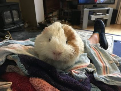 Me on Mam's lap after the bath