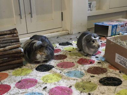 Neville and Bertie