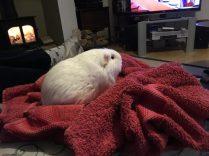 Roscoe after bath