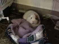 Roscoe enjoys his bed