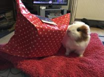 Roscoe's Christmas gift 2018