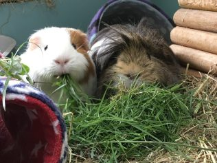 Roscoe and Neville eat a pile of grass