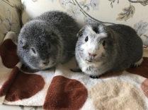 Biggles and Bertie
