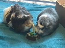 Neville helps Bertie eat his cake