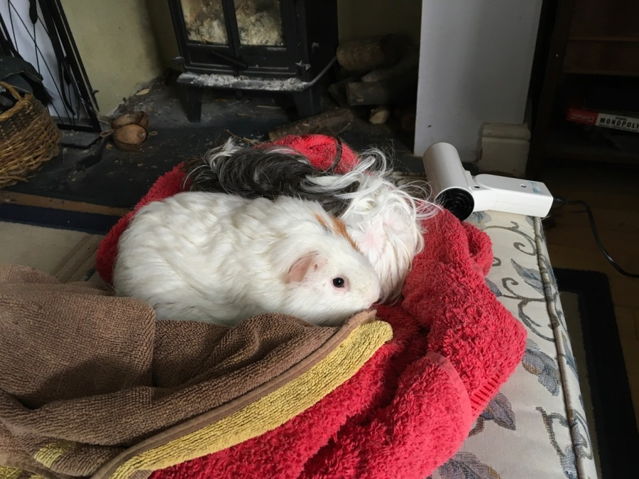 neville and roscoe have their hair dried